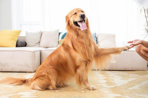 3 Tips on Avoiding Mistakes for Pet Parent